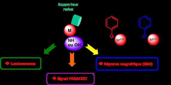 metal_complexes_in_imaging.png
